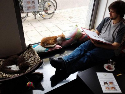 catcafe_germany.jpg