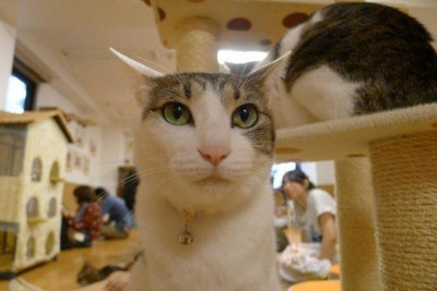 catcafe_japan.jpg
